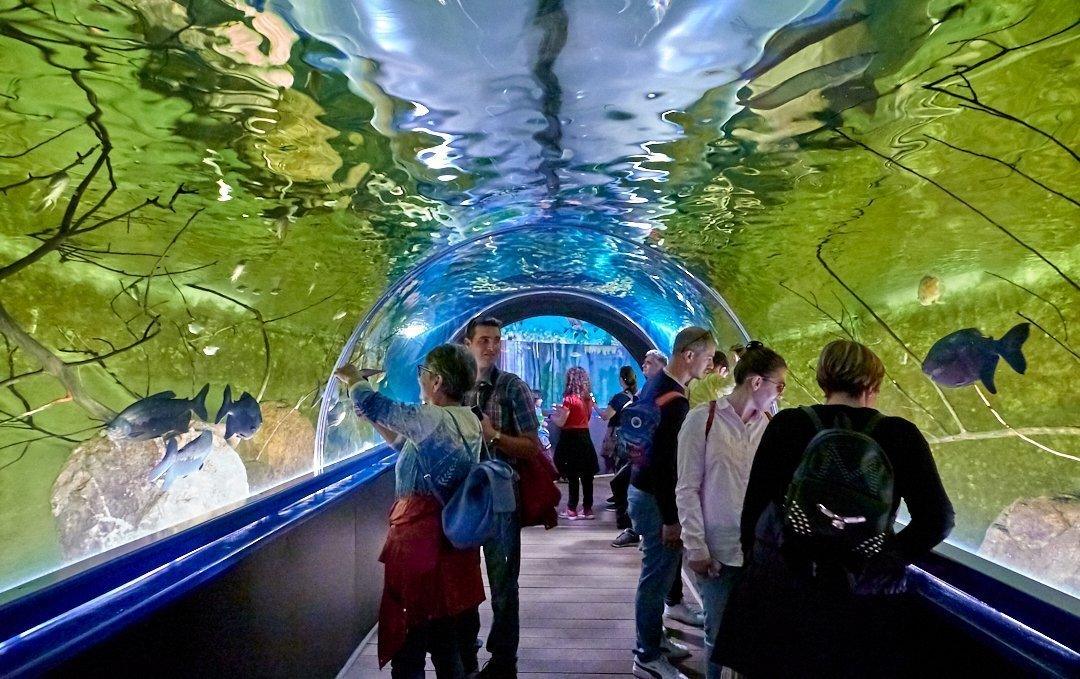 Immerse yourself in the Aquarium