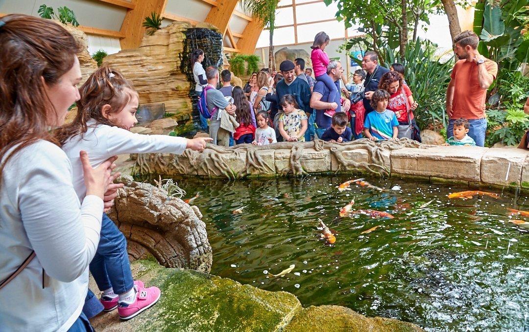 Grande vasca delle carpe Koj con cascata. I pesci interagiscono con i visitatori regalando una esperienza unica sopratutto ai bambini.