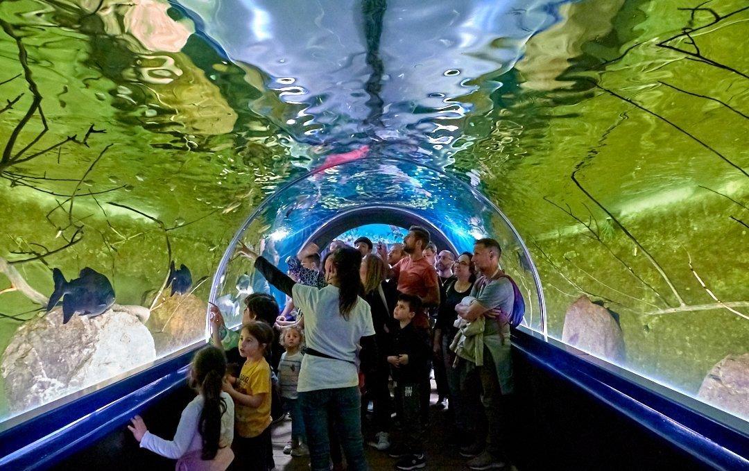 Il primo acquario a tunnel della sardegna