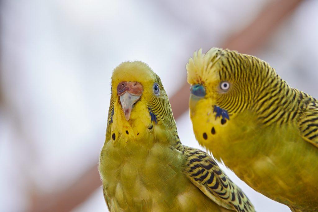 voliera dei pappagalli2
