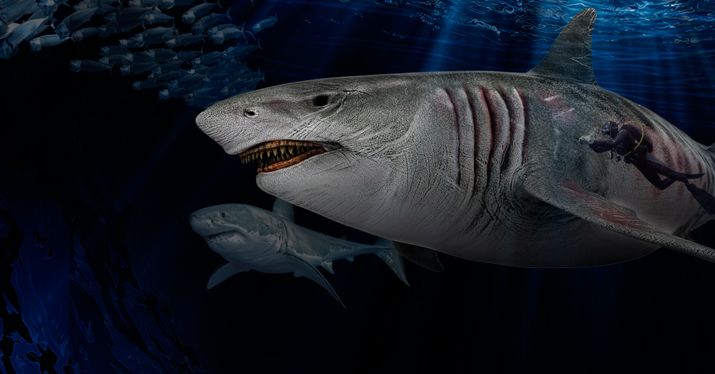 Megalodonte in mare-mostra 2021